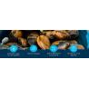 Côté Fish - Coquillages & Crustacés   Poissonnerie en Ligne